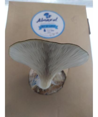 Kit De Cultivo De Hongos Comestibles Almazul