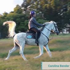 Hospedagem P/ Seu Cavalo, Pônei, Vendas, Mudas De Tifton 85
