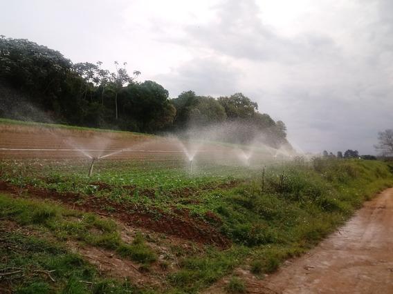Terra De Lavoura..excelente P/ Plantio De Verduras
