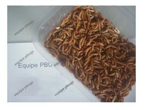 1000 Larvas De Tenebrio Molitor, Tenébrio Comum - 1kltmep+
