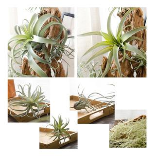 Plantas Artificiales De Ratán Para Piñas, 6 Tipos