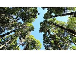 Campo 7 Hectáreas Bosque Nativo, Senderos, 334m Orilla Rio