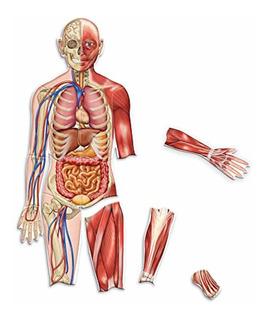 Recursos De Aprendizaje Cuerpo Humano Magnético