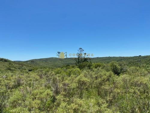 Campo Con Casa, Tajamar Monte Natural Muy Cerca De Aigua Consulte.- Ref: 1552