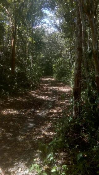 Rancho De 4251 Has En Opechen, Campeche
