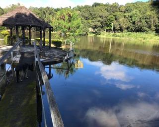 Fazenda Em Bambus - Esmeraldas - Fa00001 - 34178468