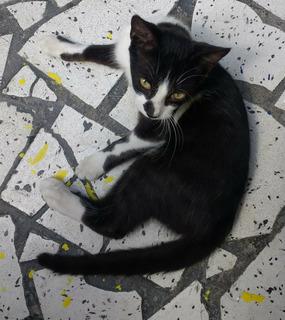 Se Entrega Gatito En Adopción En Bello Antioquia