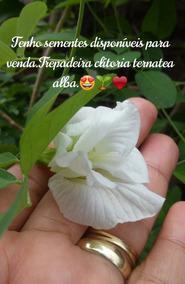 Vendo Sementes Da Trepadeira Clitoria Ternatea Alba