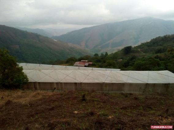 Haciendas - Fincas En Venta, Jarillo Colonia Tovar