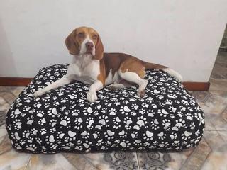 Colchon Cama Puff Para Perros, Gatos Lavable 90x 60x15