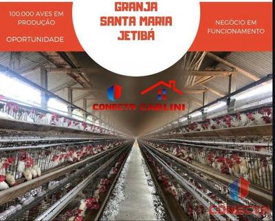 Granja Para Venda Em Santa Maria De Jetibá, Centro - 101065