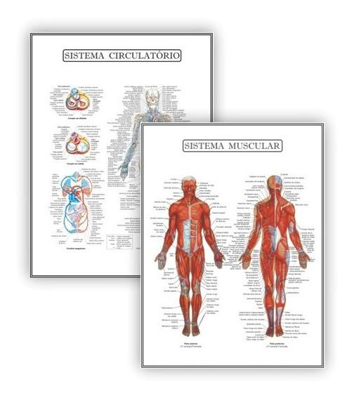 Kit 2 Poster Educação Circulatório Muscular - Plastificado