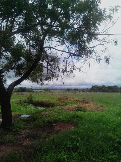 Finca Ganadera Y Agropecuaria En San Carlos