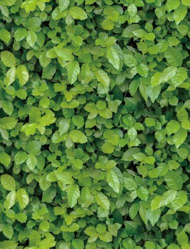 Imagen 1 de 9 de Papel Tapiz De Hojas Verdes Autoadherible Pared