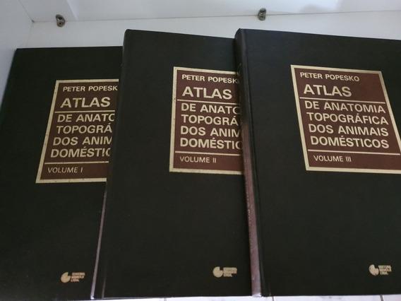 Atlas De Anatomia Topográfica Dos Animais Domésticos
