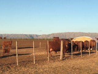 Terreno Campo En Venta Ubicado En Alihuen Alto, San Martin De Los Andes