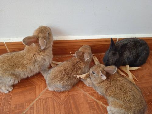 Imagen 1 de 10 de Conejos Y Gazapos Mariposa Manual Pdf