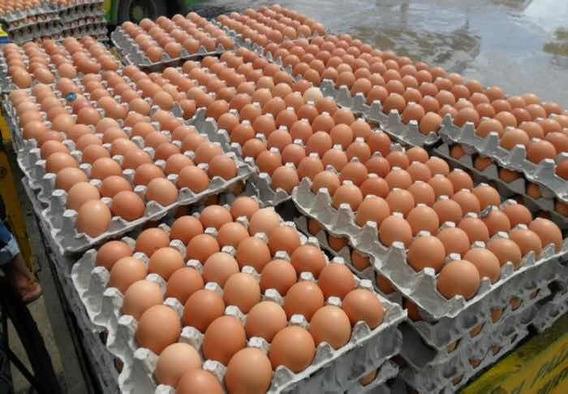 Huevos Al Por Mayor Y Menor.