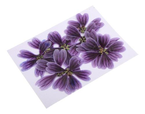 10 Piezas Prensadas Flores Secas De Althaea Rosea