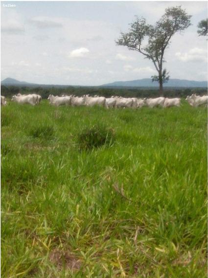 Fazenda Para Venda Em Rondonópolis, (zona Leste) - 2000/2804_1-1419407