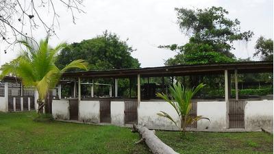 Vendo - Permuto Finca Agropecuaria En Espinal