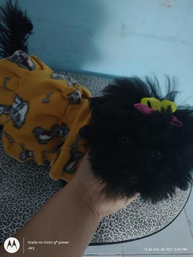Vendo Poodle Toy