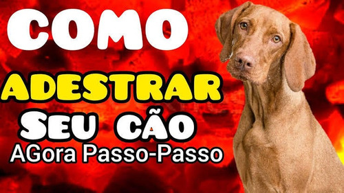 Aula De Adestramento Canino