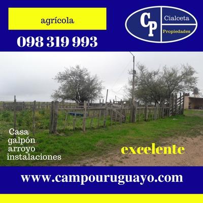 Campo Agrícola Ganadero A 70 Km De Montevideo