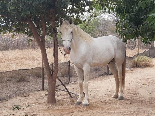 Imagem 1 de 2 de Cavalo Manso