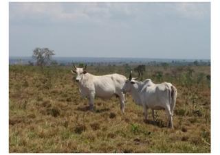 Vendo Troco Fazenda Para Pecuaria Barra Do Garça ( 4179 )