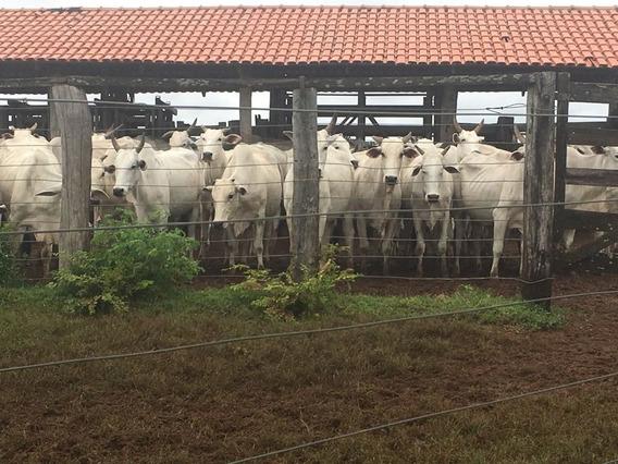 Fazenda Em Miracema De Tocantins - To - Fa00048 - 4526169