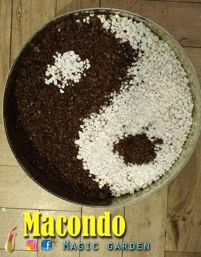 Sustrato Para Carnívoras 3dm - Macondo Magic Garden