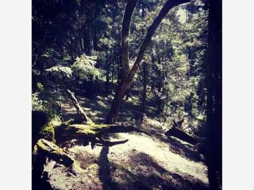 Terreno En Venta Hermosos Lotes En Bosque, Escriturado Y Facilidades De Pago