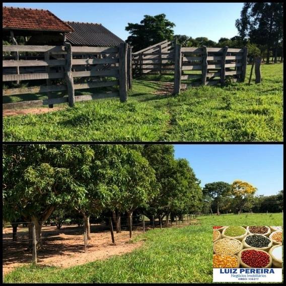 Fazenda A Venda De 49,5 Alqueires Em Bataguassu - Ms (dupla Aptidão) - 1268