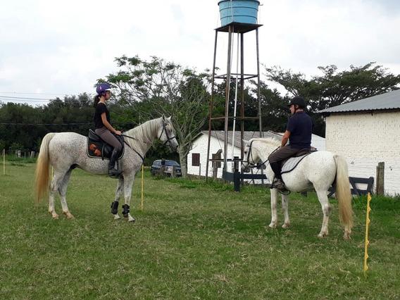 Aulas De Equitação - Passeio A Cavalo - Hospedagem - Vendas