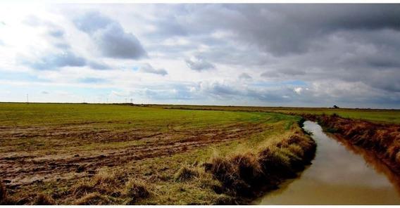 Fazenda Para Venda Em Alegrete, Fazenda 5000 Hec Alegrete/rs R$ 230.000.000 - 29598_2-946510