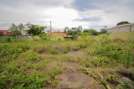 Terreno Em Veleiros, São Paulo/sp De 0m² Para Locação R$ 10.000,00/mes - Te388124