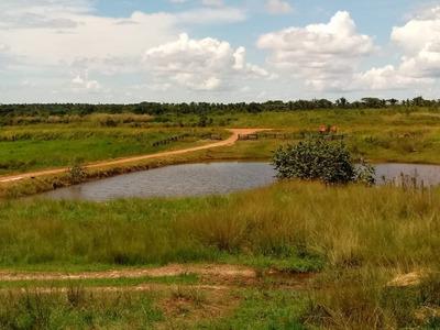 Fazenda A Venda Em Araguaína - To (pecuária) - 896
