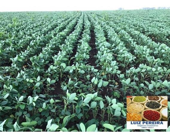 Fazenda A Venda De 2.600 Hectares Em Guaraí - To Agricultura) - 1327