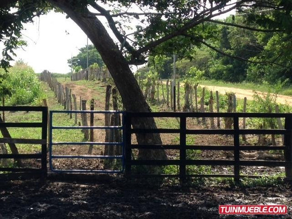 Haciendas, Finca Ganadera El Mene, Falcón