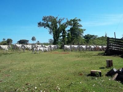 Fazenda, 256,52 Ha, Pasto, Cercada, Curral, 15 Km Cidade