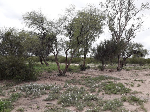 Campo 201 Has.departamento De La Paz Mendoza U$$325/ha.
