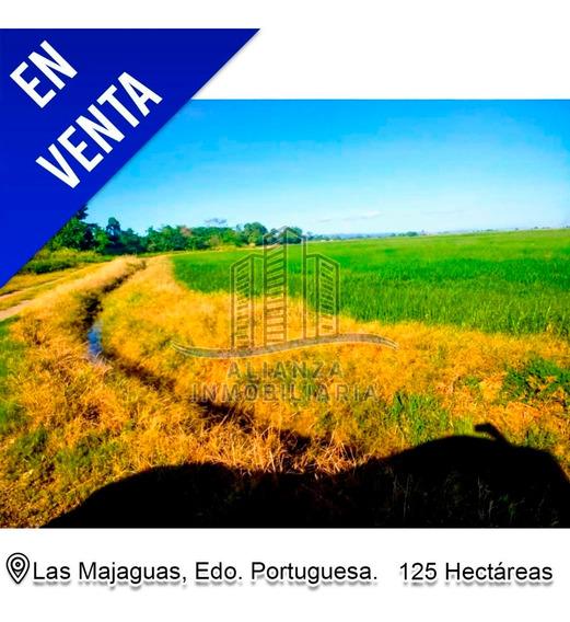 Finca De 125 Hec En Las Majaguas Alianza Inmobili 4245006548