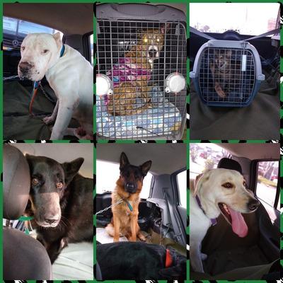 Traslado De Mascotas Puerta A Puerta 2236824386