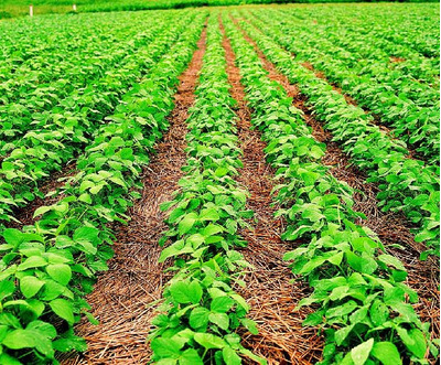 Fazenda Em Santa Maria - To, Dupla Aptidão - 234