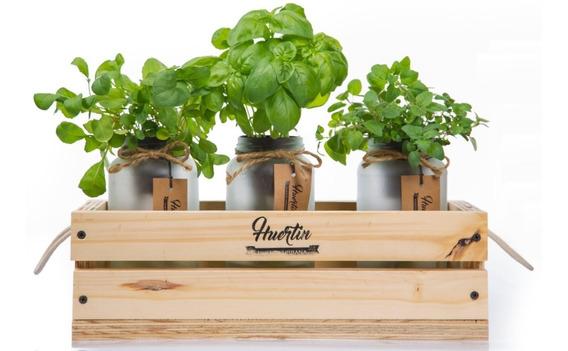 Plantas - Kit De Cultivo - Huertin X 3 + Cajon Deco - Regalo