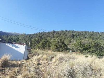 Se Vende Terreno De 138 Hectáreas En La Sierra De Arteaga, Coahuila