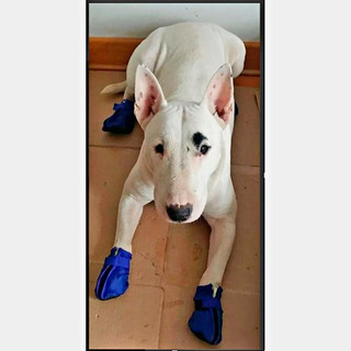 Zapatitos Impermeables Para Perros / Zapatos, Botitas /