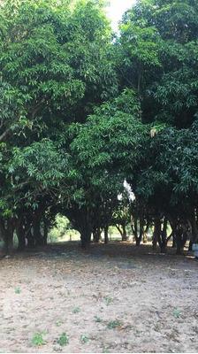 Fazenda A Venda Em Figueirão - Ms (dupla Aptidão) - 1097