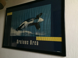 Cuadro De Orcinus Orca Grande 74cms Alto X 1.5m Ancho